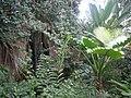 Meijer Gardens October 2014 53 (Tropical Conservatory).jpg