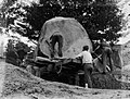 Men manoeuvring a piece of Kauri on a truck (AM 75772-1).jpg