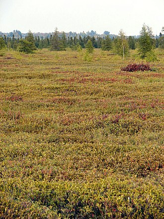 Bog - Mer Bleue Bog, a typical peat bog, in Ontario, Canada.