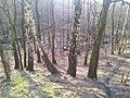 Mikolow, Poland - panoramio (150).jpg