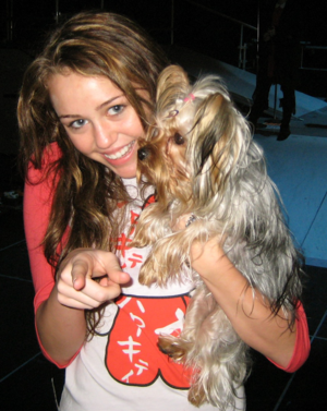 Miley Cyrus with her dog, Roadie