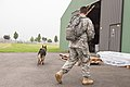 Military working dog and handler practice explosives detection 140729-A-BD610-030.jpg