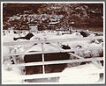 Milking the ewes at Valþjófsstaður. (4558882360).jpg