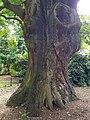 Minchenden Oak Garden, Southgate, London N14 20170804 105011 (47797171831).jpg