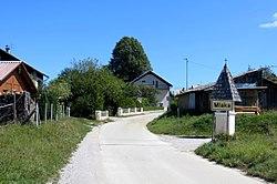 Mlaka pri Kocevju Slovenia.jpg