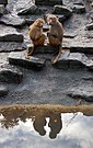 Monkey business (5235144247).jpg