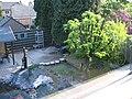 Morning picture of my backyard - panoramio.jpg