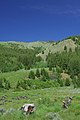 Mountain field in Sun Valley, Idaho.jpg