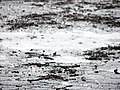 Mud Puddle in Prospect Park (2625872080).jpg