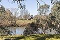 Murray River on Gateway Island, looking towards NSW (1).jpg
