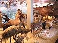 Museo Universitario-Animales-UdeA.JPG