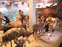 museo universitario universidad de antioquia wikipedia