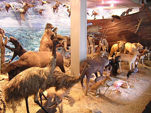 Museo Universitario-Animales-UdeA Museums in Medellin