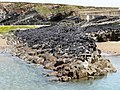 Mussel bed, Summerleaze beach, Bude - geograph.org.uk - 1304728.jpg