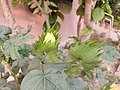 My garden plants 36.jpg