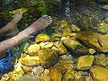 Nagalapuram Hills Fish Massage.JPG