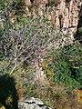 Nanfen, Benxi, Liaoning, China - panoramio (15).jpg