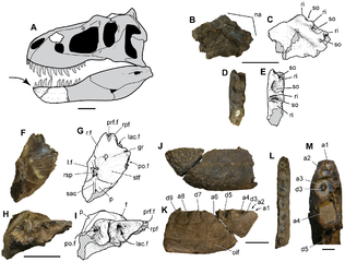 tiranosaurio - Nanuqsaurus (El Tiranosaurio de Alaska) 316px-Nanuqsaurus_hoglundi