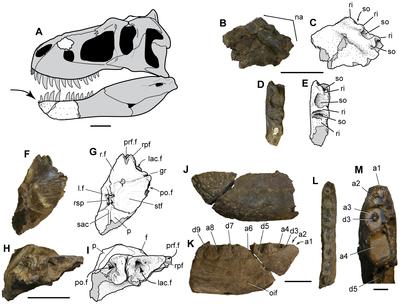 Nanuqsaurus hoglundi.png