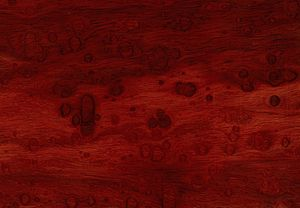 Lignum nephriticum - The deep red wood from the narra tree (Pterocarpus indicus), the source of lignum nephriticum cups