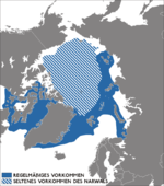 Narwhal distribution map.png