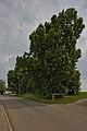 Naturdenkmal Lindenreihe und Grubbank, Kennung 82350290007, Gechingen 08.jpg