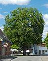 Naturdenkmal Nürtingen-Kastanie beim Schlachthof 81160493230.jpg