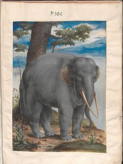 Nature Studies page 6 elephant.jpg