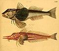 Naturgeschichte in Bildern mit erläuterndem Text (Taf. LXIX) (6058668513).jpg
