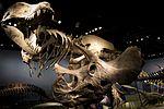 Naturhistoriske Rigmuseumen T-rex.jpg