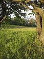 NaturschutzLassee20140524 194716.jpg