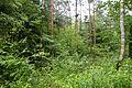 Naturschutzgebiet Rehburger Moor IMG 3193.jpg
