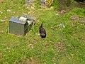 Natuurpark Lelystad - Otter (Lutrinae) v2.jpg