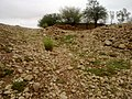 Navidhand last 174 - panoramio.jpg