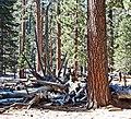 Near San Jacinto Peak, CA 2-7-14a (16483649505).jpg