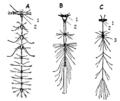 Nervsystem insekter ugglan.png
