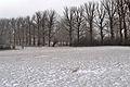 Neu i arbres darrere del santuari de la Virge de la Vega.JPG
