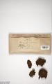 Neuchatel Herbarium Types NEU000113047.tif