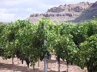 New Mexico wine alcoholic beverage made from grapes grown in New Mexico, USA