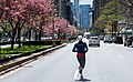 New York City Jogger Runs Down An Empty Park Ave COVID19.jpg