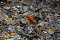 Newt-snail-trail - West Virginia - ForestWander.jpg
