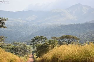 Guinean montane forests