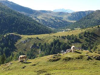 Gurktal Alps - Pastures on Nockalm Road