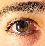Colore degli occhi wikipedia - Colore degli occhi diversi ...