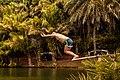 Off the plank.jpg
