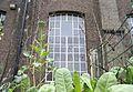 Onkruid voor raam.jpg