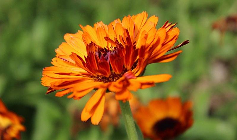 File:Orange (26267066001).jpg