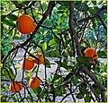 Oranges 3-16-14 (13644422983).jpg