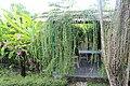 Orchid Garden Bali Indonesia - panoramio (24).jpg