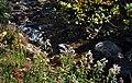 Orford brook 2008 - panoramio.jpg